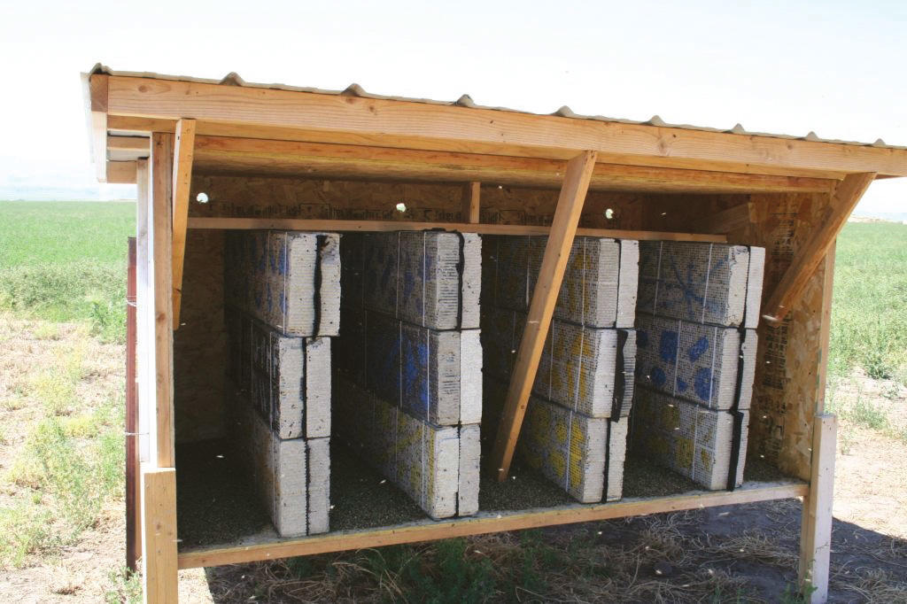Shelter design using dimensional lumber, plywood, and corrugated metal.