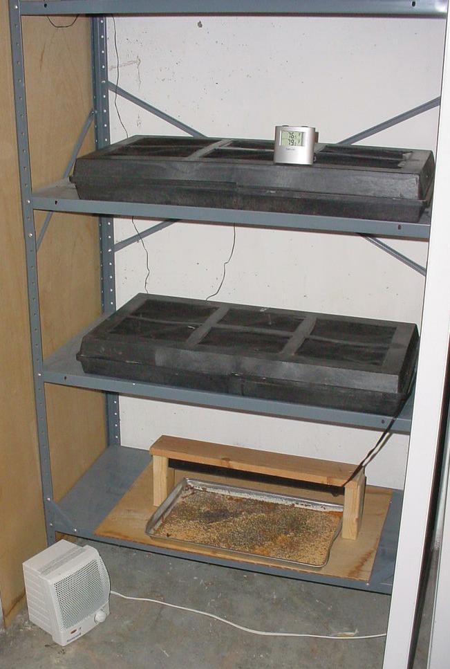 basement incubator