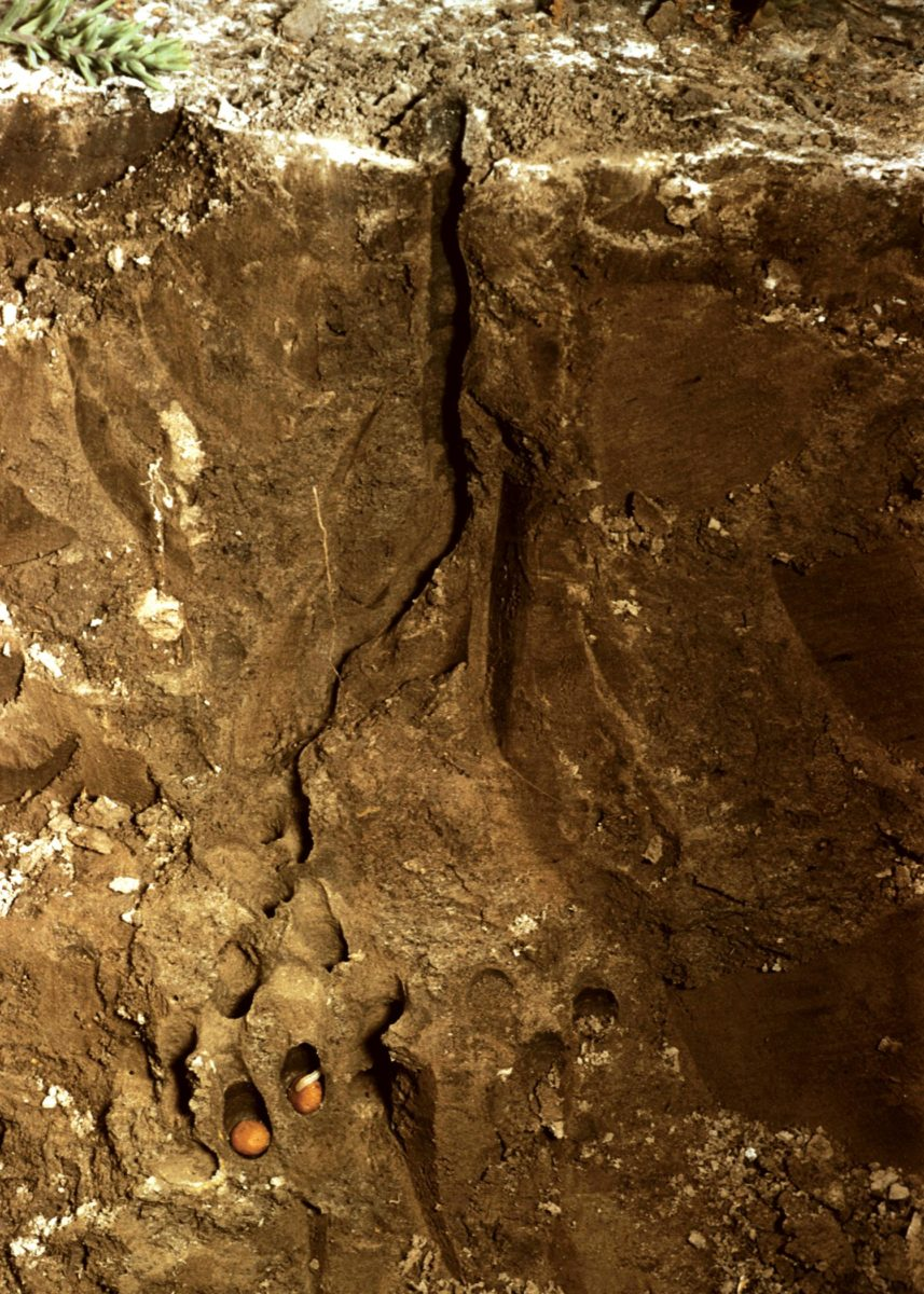 Soil profile of Nomia melandera nest
