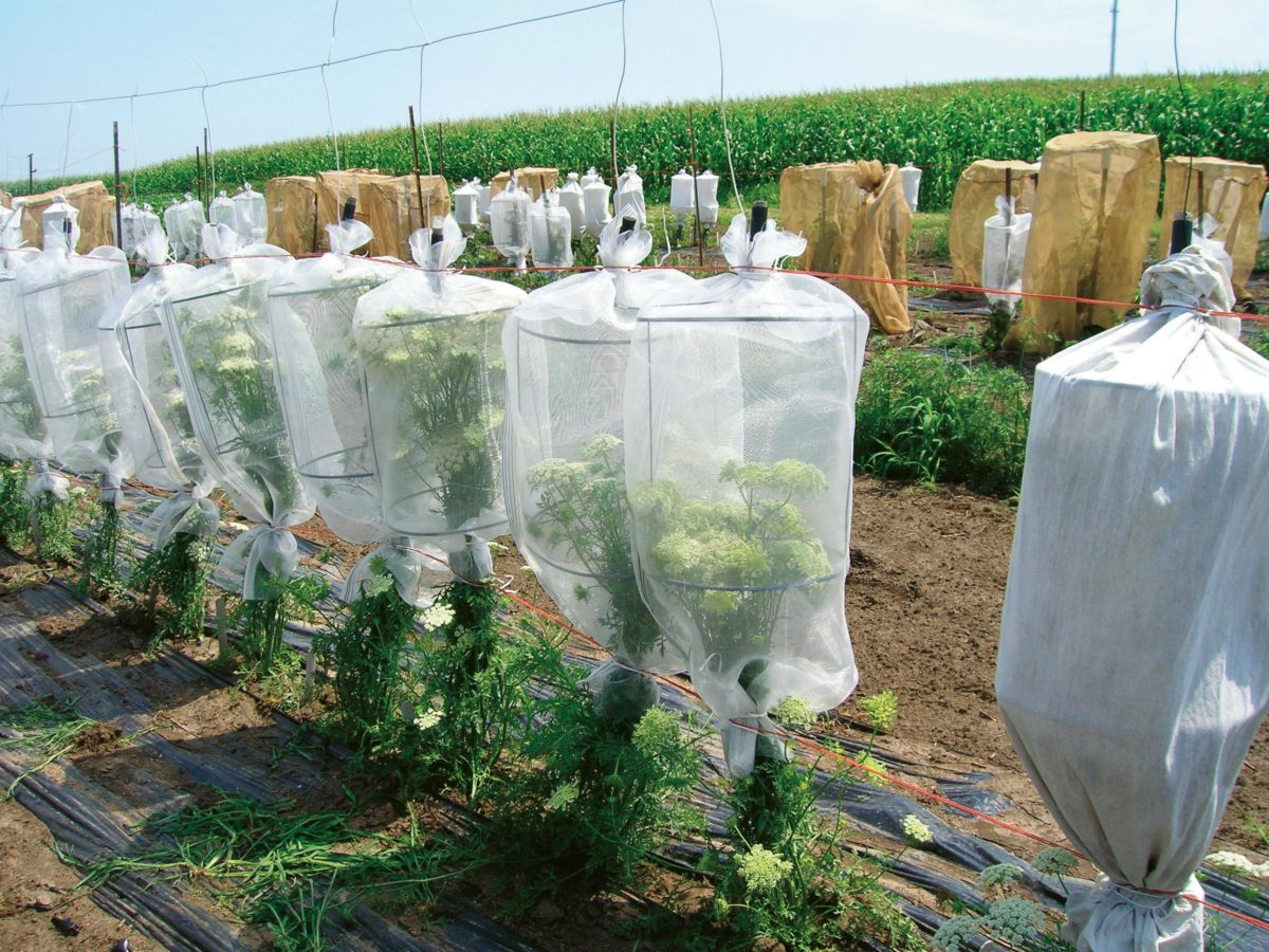 Small pollination cages