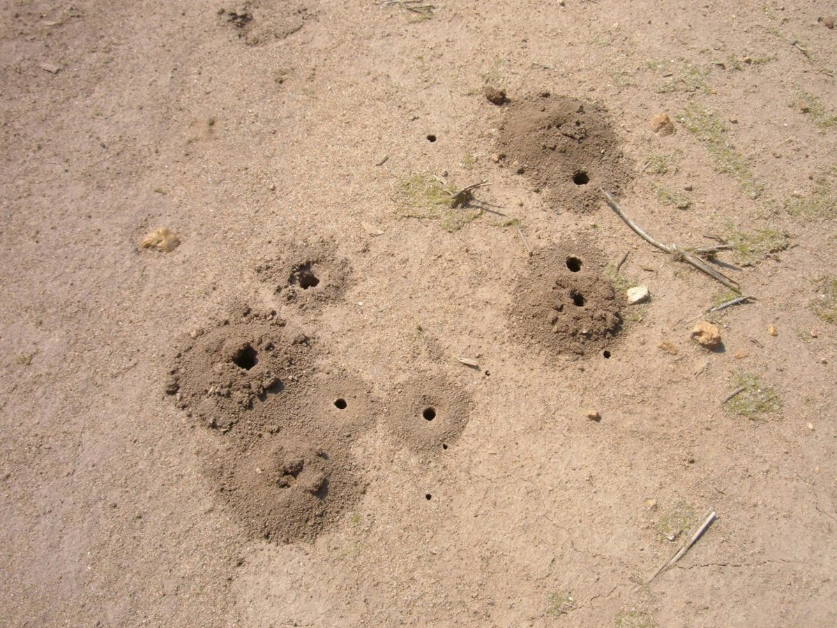 Holes in the ground.