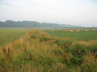 CREP, Conservation Reserve Enhancement Program, grazing, nesting area, wildlife, pollinators, Robert C. Fry