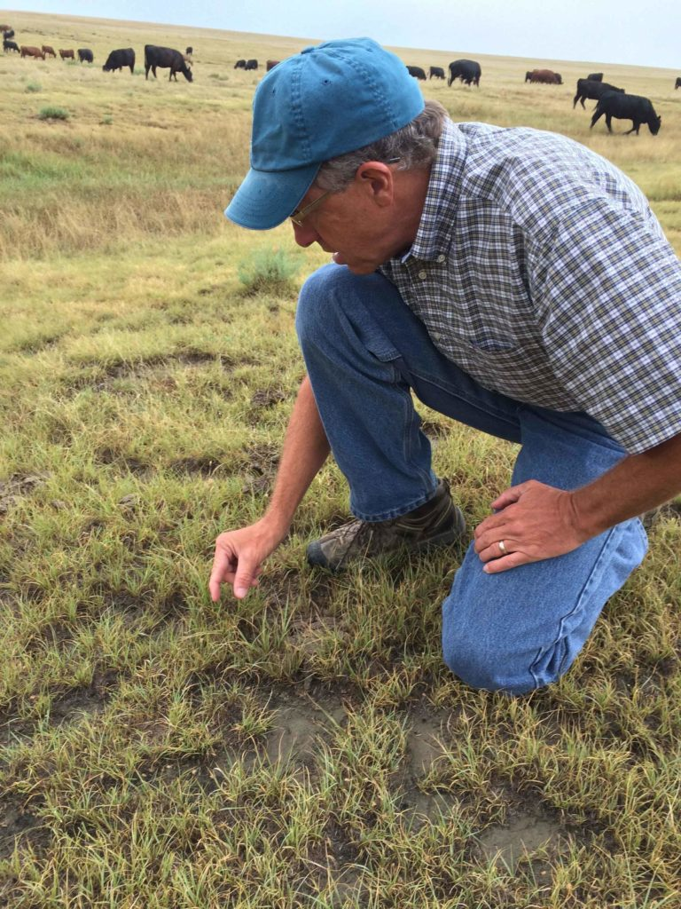 Man kneeling and looking at pasture grass