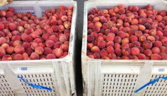 peaches in crates