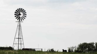 An old windmill and cows on Texas High Plains