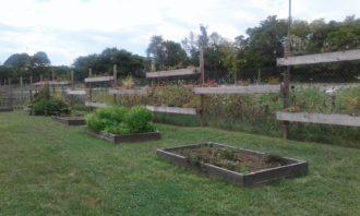 Old School vegetable farm