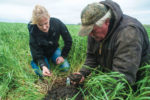 Abbey Wick worked with Doug Toussaint and other farmers to evaluate how cover crops affect soil health