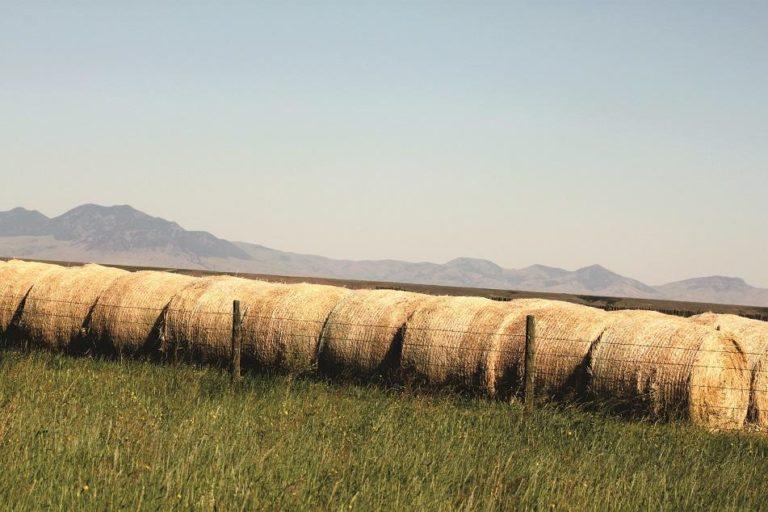 A row of hay bales