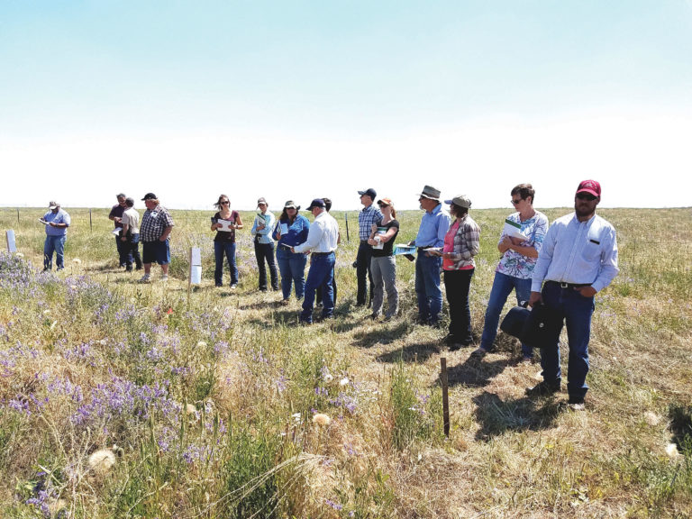 2017 field day about grazing cattle and seeding perennials to restore degraded rangelands