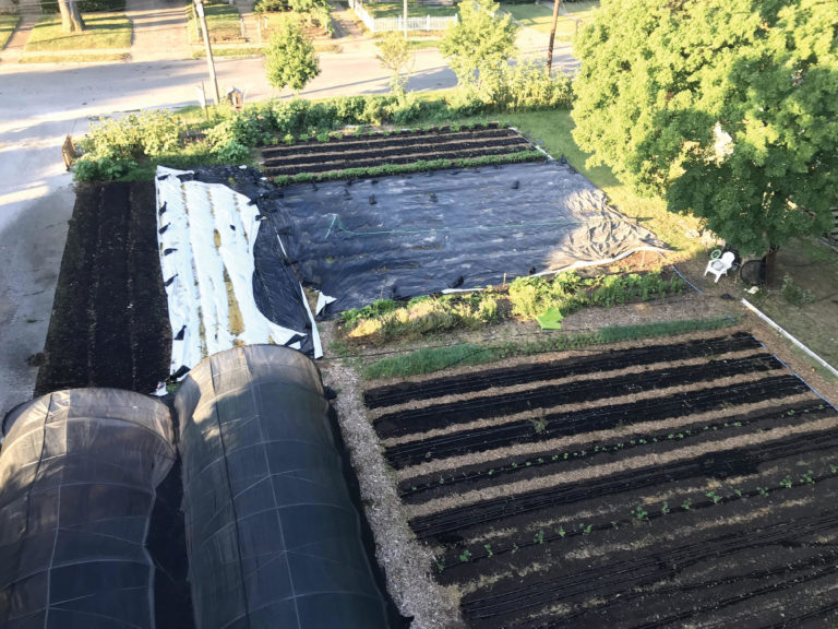 Beds covered with plastic between crops to accelerate the decomposition of plant residue