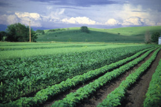 diversity, crops, intercropping, plant diversity, agriculture, jerry dewitt