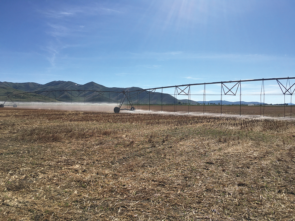 Low elevation spray application irrigation system