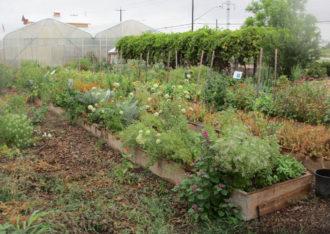 Educational garden at San Antonio Food Bank