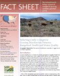 Selecting Cattle Factsheet