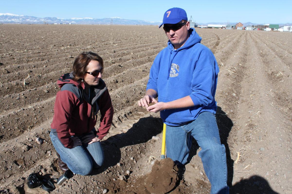 Soil Health Potato Farm