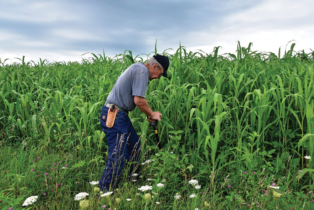 Soil Testing in Corn Field