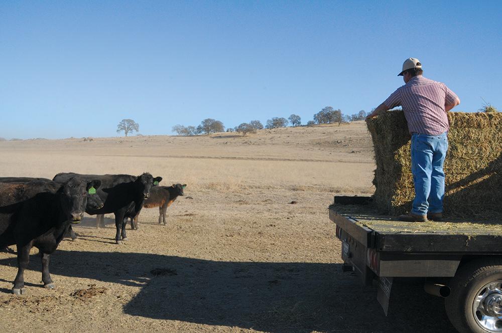 Tate 2015 drought feeding hay