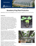 strawberry plug plant production fact sheet