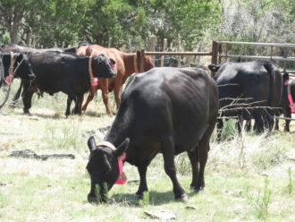 Wilbanks-Ranch-NM.jpg