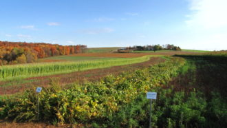 groff farm, wooded areas, diverse cropping, Mandy Rodrigues, field margin, pollinators