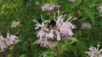 Flowering cover crop.
