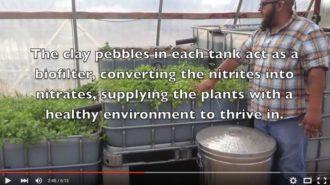 aquaponics-video.jpg