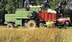 combine at buckwheat harvest