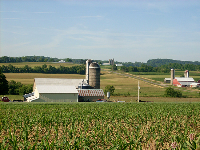 dairy farm and corn field