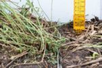 plant with rainwater gauge