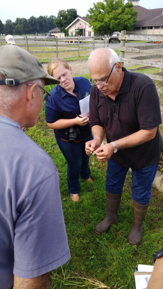 people examining a clover plant
