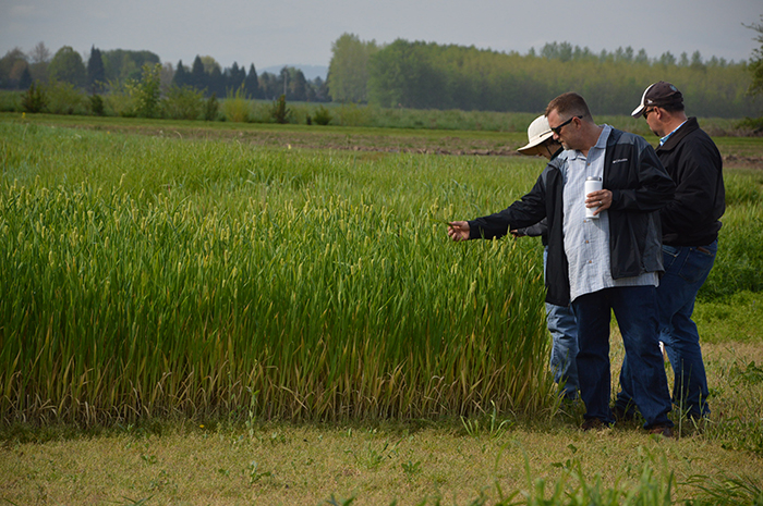 farmers looking at wheat together