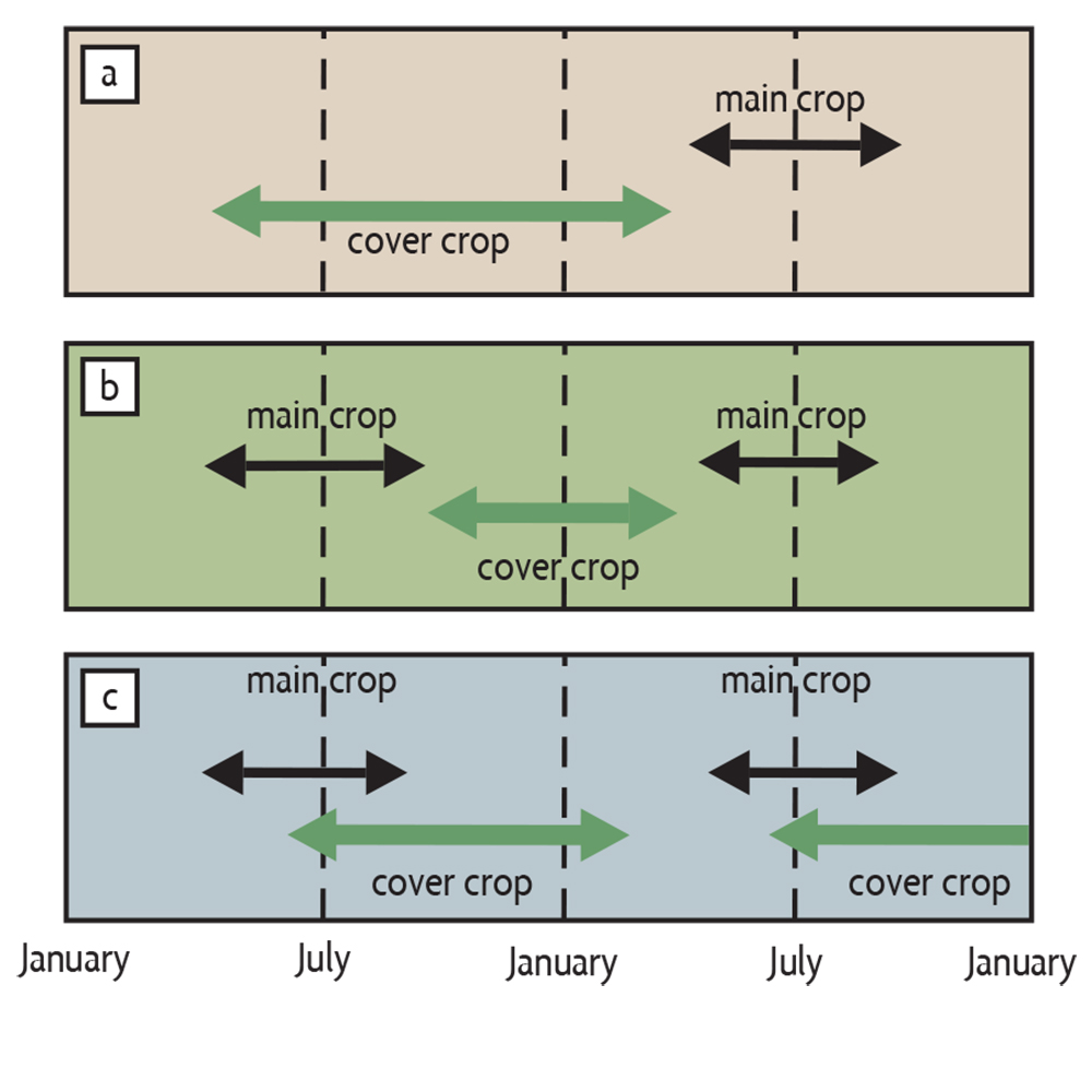 timing cover crop growth