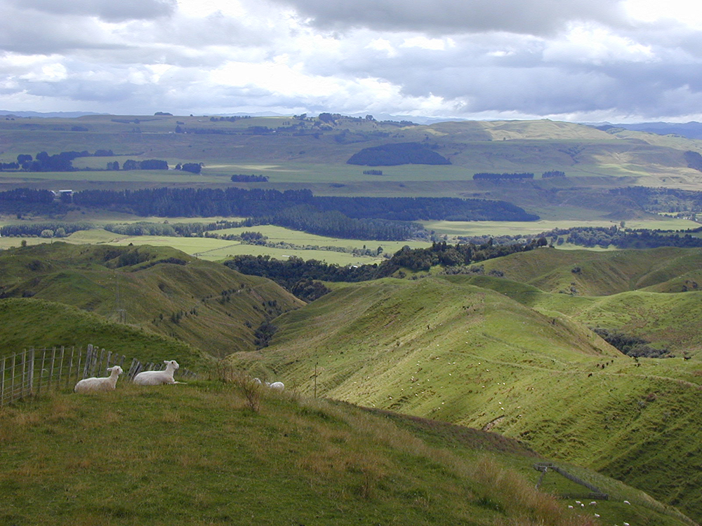 grazing in marginal lands in new zealand