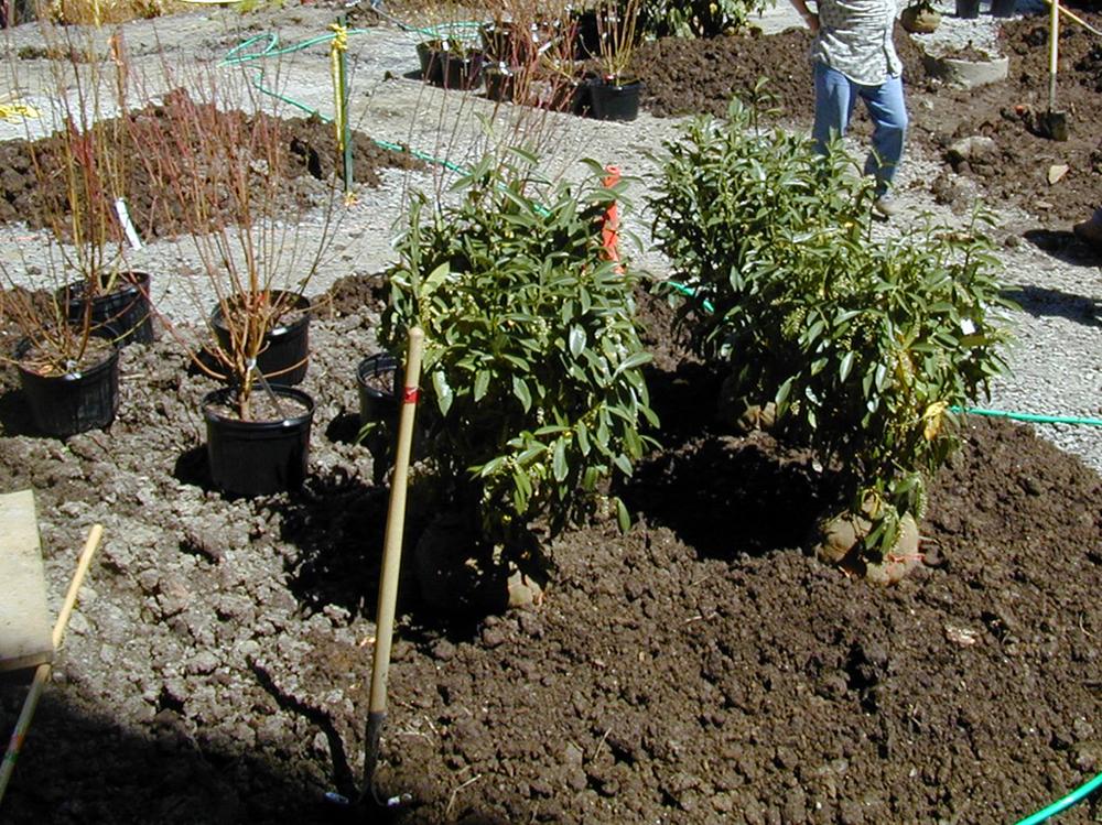 compost application