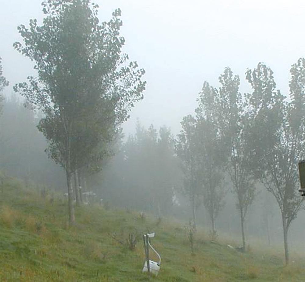 poplar trees to reduce landslide risk