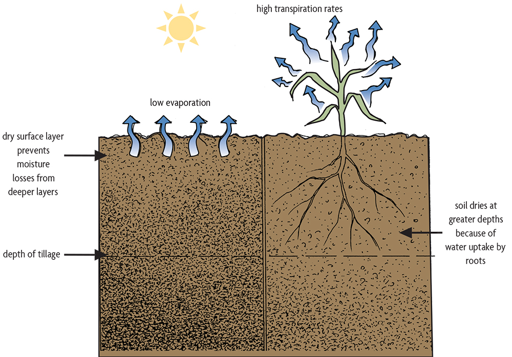 impacts of cover crops on soil flowchart