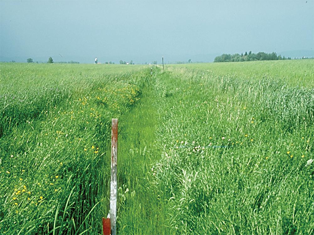 grass waterway
