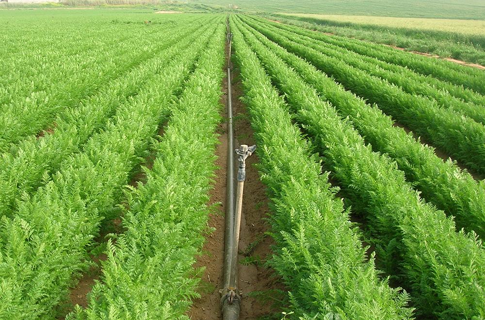 portable sprinkler irrigation system