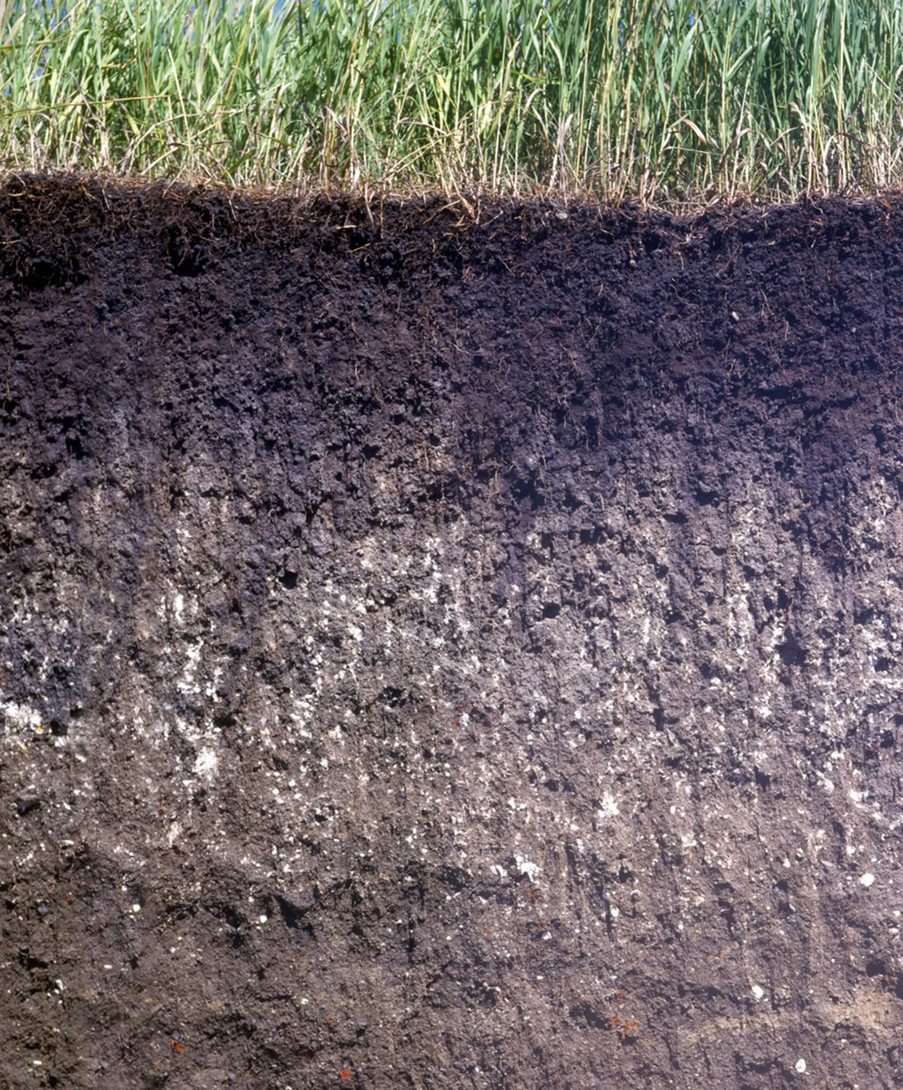 Roots in soil storing nutrients