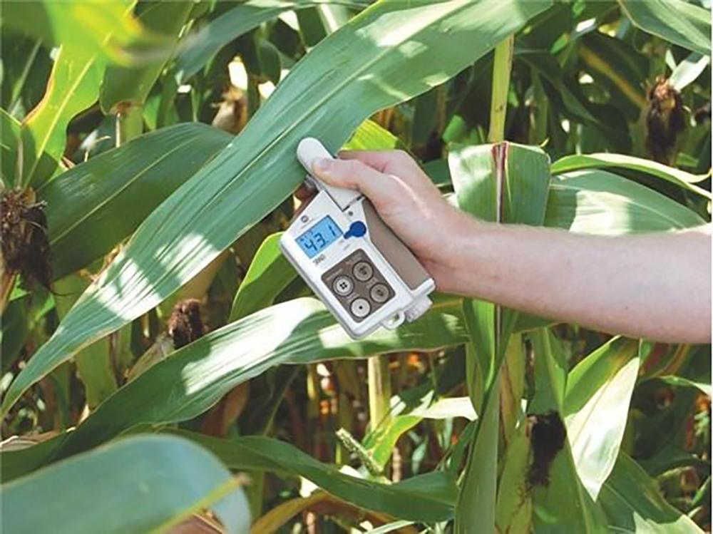 leaf chlorophyll (SPAD) sensor