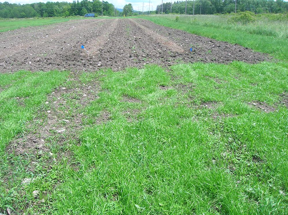 subsoil restoration after topsoil installation