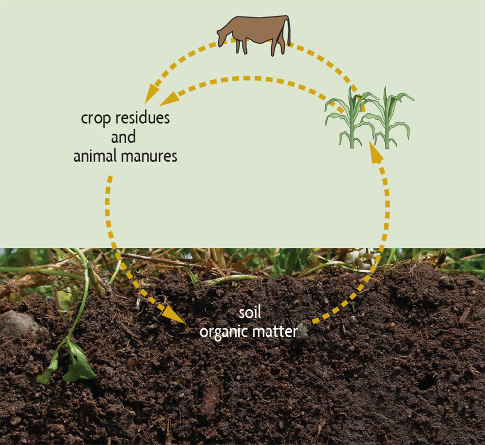 agricultural nutrient cycle