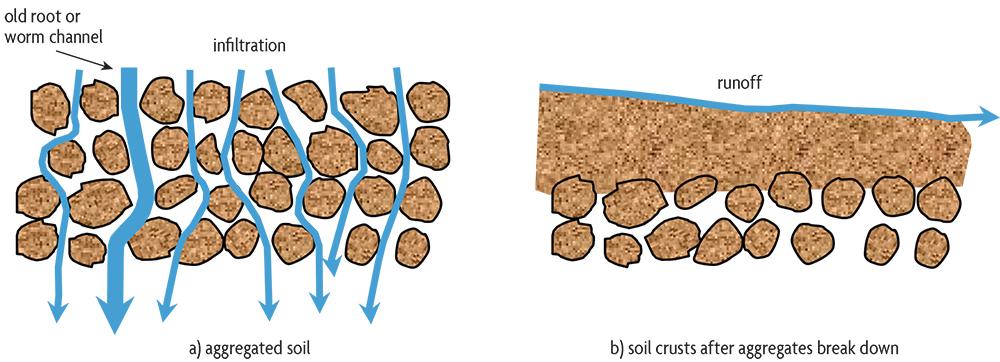 Diagram of water flow patterns in soil