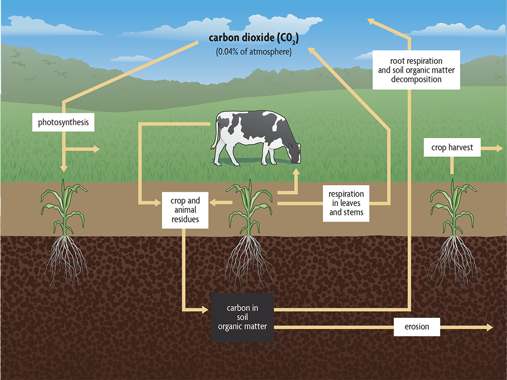 agriculture carbon cycle