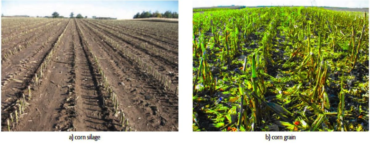 soil surface after harvest of corn grain and sillage