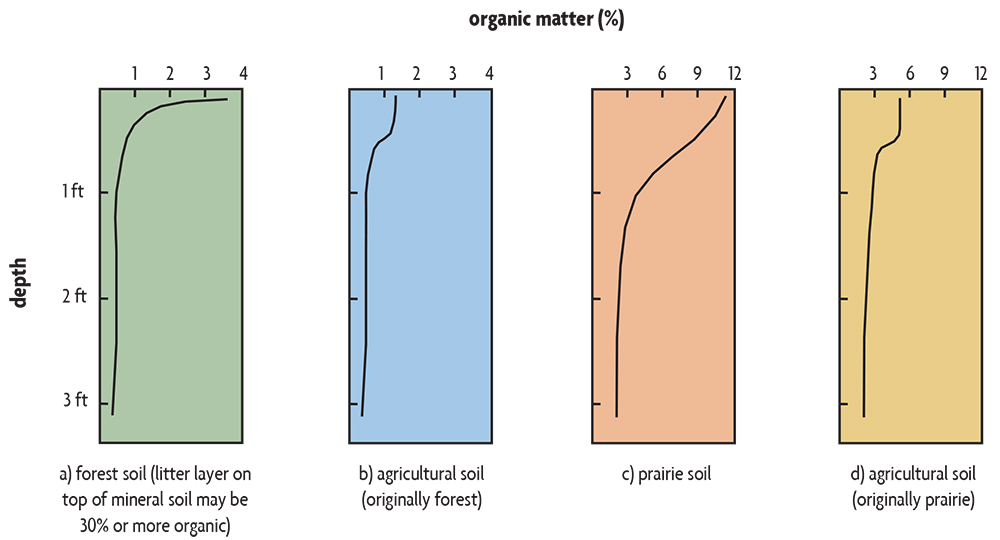 Bar graph showing Organic Matter content with depth