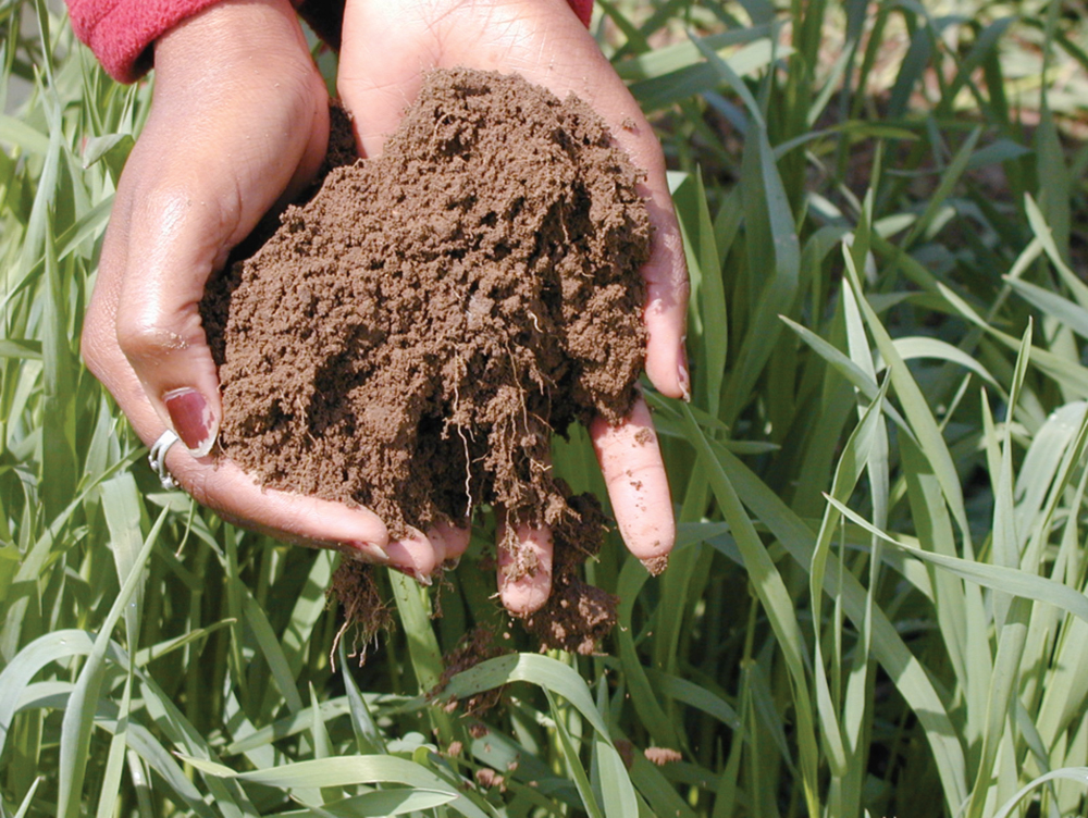 Well-aggregated soil
