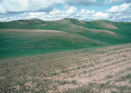 impacts of tillage erosion on soils