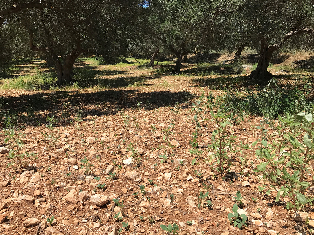land degradation in greece