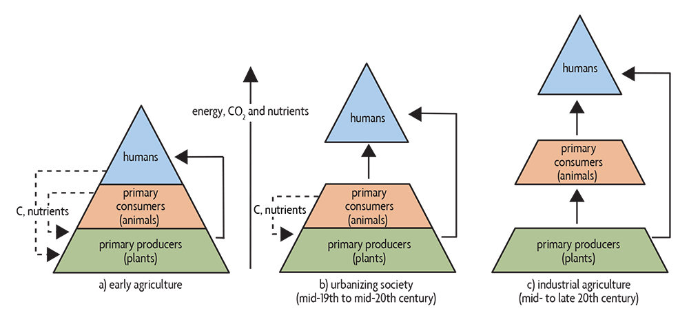 nutrient and carbon flows over time